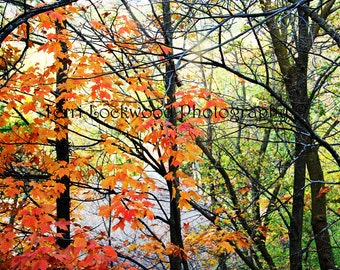 Autumn Leaves at Holy Hill Fine Art Photography
