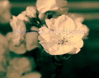 Cherry blossom photography sakura photo