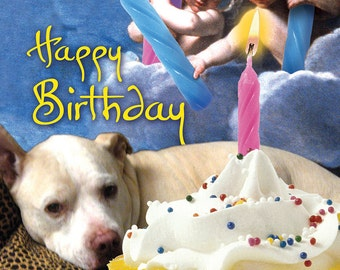 Pit Bull Birthday Card with Cupcake and Angels