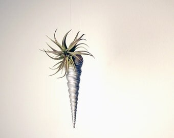 air plant icicle ornaments //  air plant tillandsia // by robincharlotte