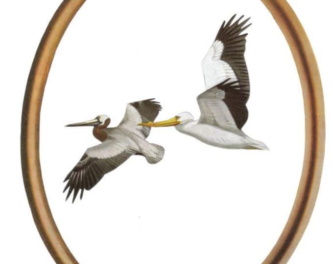 Coastal Pelican Art, Nautical Bird Artwork
