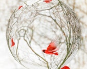 Cardinal Refraction Photo - Bird Art Photography - Red Northern Cardinal - Wall Art