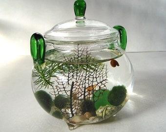 "Tiny Glass Teapot ""Green Tea for One""  Marimo Moss Ball Aquarium Terrarium"