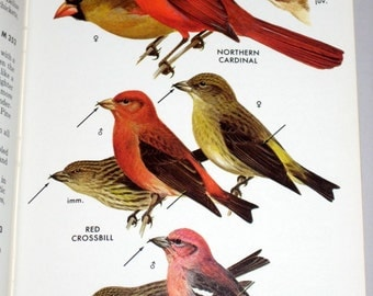Vintage (1980) Audubon Bird Book - Field Guide to the Birds East of the Rockies -   Great Illustrations
