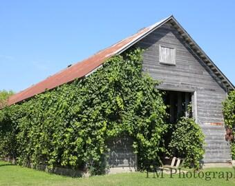 Amana Colonies - Barn - Flowers - Flower Gardens - Iowa - German - Historic Village - Fine Art Photography