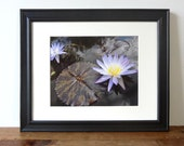 water lily photograph, flower photography, purple water lilies, botanical art, nature decor