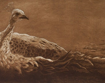 The White Peahen, Limited Edition Etching (print)