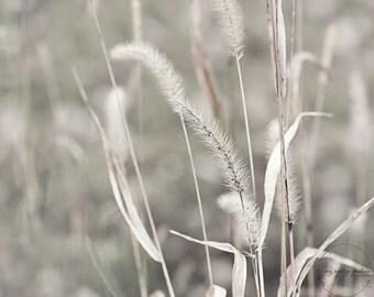 Soft grass-nature photography - nature photo- cottage garden-fall photo- autumn (5 x 7 Original fine art photography prints) FREE Shipping)