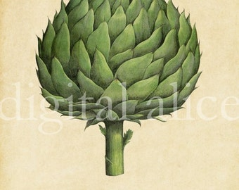 Botanical ARTICHOKE POSTER PRINT - Digital Download - Antique Wall Art Decor Instant Printable - Green Artichoke Print