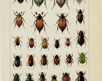 1869 Antique BEETLE print, beetle engraving, vintage insect print, species of colorful BEETLES. Insects. Entomology. 120 years old print.