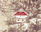 Chirp, Birdhouse, Snow, Photography Print, 8x10 + More Sizes, Red, White, Winter Scenes, Home Decor, Wall Art