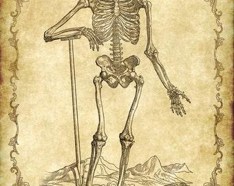 Victorian Goth Steampunk Antique Anatomy Skeleton  - 5x7 Inch Single Digital Image - Instant Download, Printable, Digital Download
