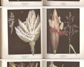 The Book of Wild Flowers, 1924 National Geographic Society Color Illustrations by Mary Eaton & E. J. Geske, Black and White Photographs.