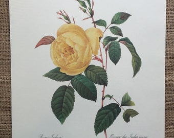 Vintage Redoute Art Illustration, Yellow Rose Bookplate, French Bookplate Print, Rosa Indica, Rosier des Indes jaune  #60 - 3