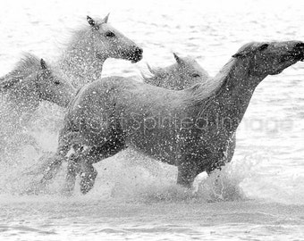 CAMARGUE HORSE, 7.5x5in Print - FLICK, Equine Photography, Art Print, Black & White