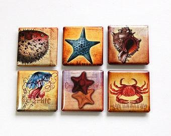 Magnets, Sea Life, Square Magnets, Magnets, Fridge Magnets, Magnets, button magnets, Starfish, Sea Shells, Crab, Beach, Sealife (4617)
