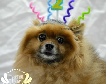 Pet Birthday Hat (XS-XL)