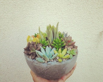Fun succulent  living arrangement in stunning rustic planter