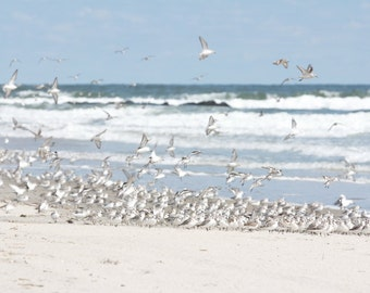 Flock of Birds Beach Art, Coastal Wall Art, Sanderlings on the Beach Shorebird photograph, Ocean Waves Print With Birds in Flight, Seashore
