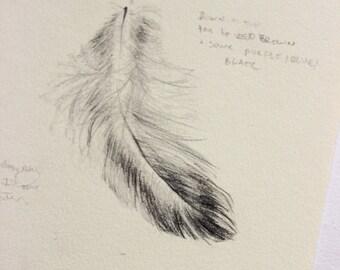 Pheasant Feather Study - Original Drawing