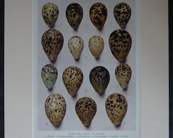 Vintage Nature Print of Bird Eggs by Henrik Gronvold 1930s natural history art, Speckled bird watching decor, Available Framed, Egg Picture