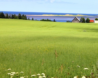 Field on Prince Edward Island