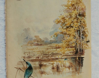Vintage Botanical Book Page -October - Kingfisher - Elderberries -  Nature Notes of an Edwardian Lady - Edith Holden - Country Diary