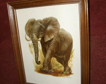 Rare Vintage Lithograph After A Famous African Elephant Loxodonta Africana Color Print From 1958