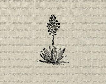 Agave Plant Vector Clipart Download, Aloe Herb Flower Blossoms Graphic, Vintage Style Victorian Nature Botanical Illustration WEB1739AF