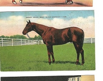 kentucky derby linen postcards race horses kentucky gentleman
