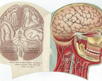 anatomy head illustration with foldout illustrations antique medical book steampunk downloads