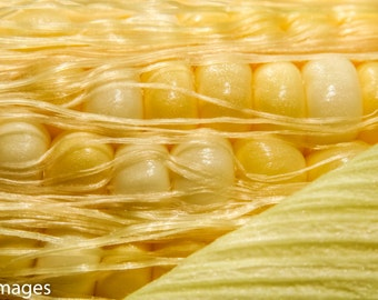 Corn, Vegetable, Food,Instant Download,Printable,Wall Art,Photography,Digital,High Resolution,Large Format,Gift,Kitchen,Decor,Theme,Idea