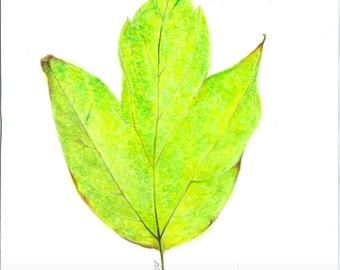 Colorful Fall Leaf Watercolor Print. Digital Download. 9x12 Original Watercolor Art. Printable Wall-Art