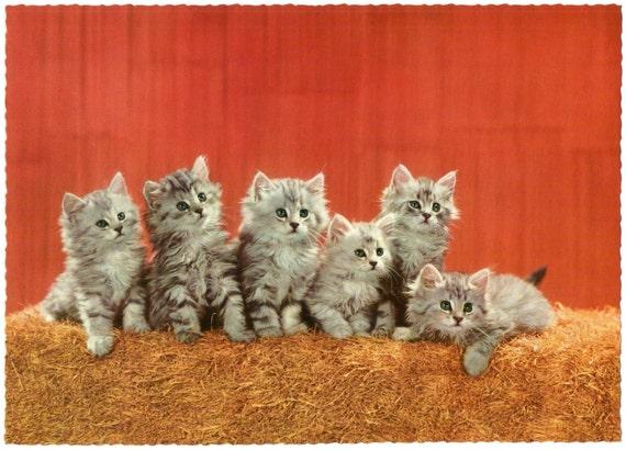 Resultado de imagen de postales años 70 de gatitos