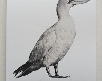 Gannet Illustration Giclee Print, A4