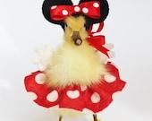 Anthropomorphic Taxidermy Little Duckling.