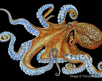 Octopus 2 Colored Pencil Drawing