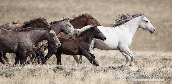 Wild Adobe Town Family Runs - Fine Art Wild Horse Photograph - Wild Horse - Adobe Town - Fine Art Print