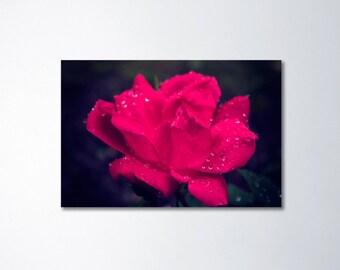 Large wall art, canvas art, rose photography, flower wall art, canvas gallery wrap, large canvas art, pink wall art, home decor