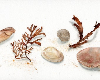 Beach treasures, Original Watercolor Painting - Nature illustration, Seashells, Beach cottage decor, Natural wall art - Neutral brown, cream