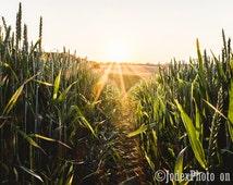 Instant Digital Download Fine Art Nature Photograph Summer 'Solstice' Printable