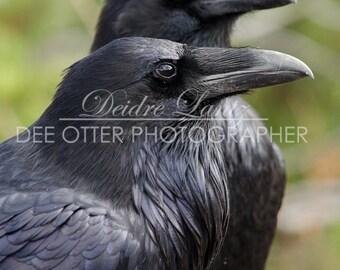SALE Raven Couple 8x10 photo print