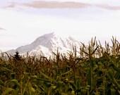 Mt. Rainier and Corn Field, Mountain, Autumn, Landscape 8x10