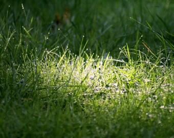 Grass Print - Green print - Garden Print - Home Decor - Garden Decor - Garden Photography - Nature Photo - Nature Print - Grass Decor - Art