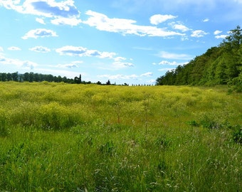 Field photography in Tuscany Siena Italy Chiusdino