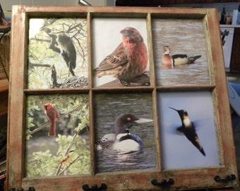 old window with bird photos