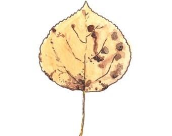Aspen Leaf (5x7)