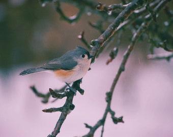Bird, Winter Birds, Titmouse, Outdoor Photography, Nature Photography, Winter, Winter Photography, Ice Storm