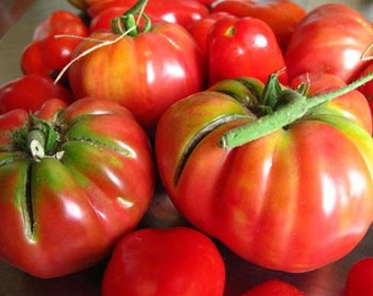 Tomato Brandywine - 100 Seeds - Heirloom Culticar