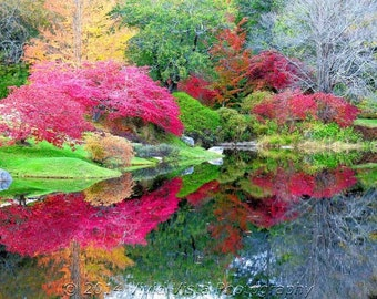 Fall Photography – Colorful fall foliage from the Asticou Azalea Garden near Northeast Harbor Maine